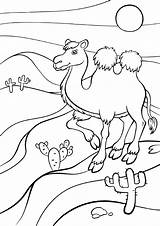 Coloring Camel Pages Desert Habitat Animals Swamp Animal Printable Colouring Stands Getcolorings Coloringpagebase Cartoon Habitats Smiles раскраски категории из все sketch template