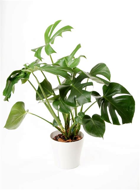 house plants the best indoor house plants and how to buy them photos architectural digest