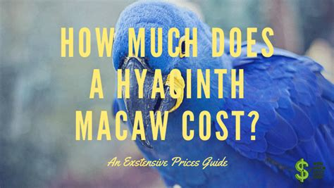 How Much Does A Hyacinth Macaw cost? - How much does cost?
