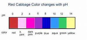 Red Cabbage Changes Color Cabbage Juice Red Cabbage