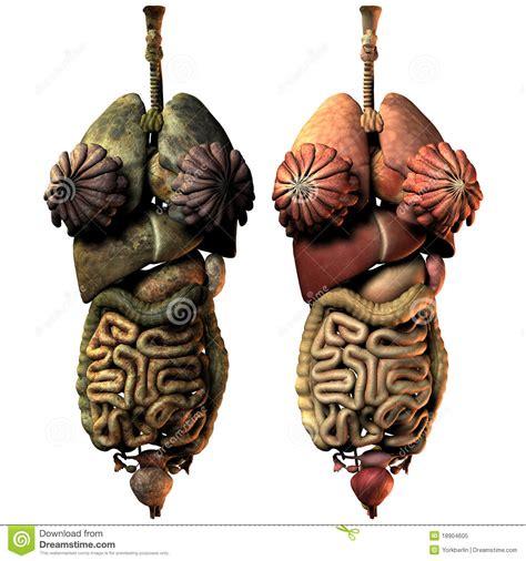 organi interni organi interni ammalati e sani della donna illustrazione