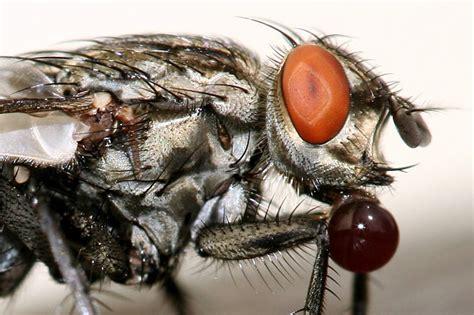 Hilfe Gegen Mücken In Der Wohnung by Ungeziefer In Der Wohnung Arten Ungeziefer In Der Wohnung