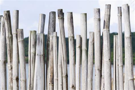 cloture en bambou cl 244 ture en bambou sp 233 cificit 233 s et prix ooreka