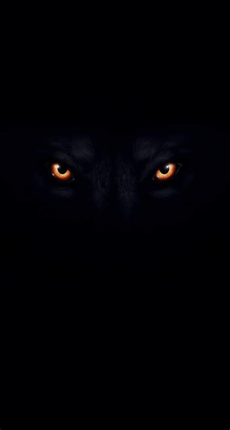 Angry Wolf Wallpaper Black by Black Wolf Wallpaper Wallpapersafari