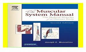 The Muscular System Manual  The Skeletal Muscles Of The