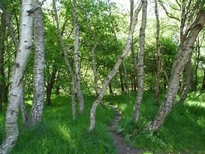 Foret De Sherwood : sherwood forest wikipedia ~ Voncanada.com Idées de Décoration