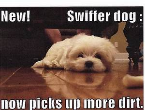 Dogs With Captions To Perk Up Your Monday Michael Bradley ...