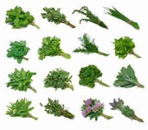 Winterharte Pflanzen Liste : winterharte winterfeste mehrj hrige kr uter im ~ Michelbontemps.com Haus und Dekorationen