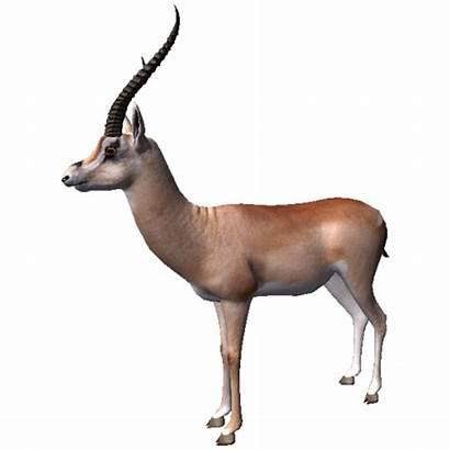 Gazelle Dorcas Ancestors Gamepedia Humankind Odyssey Gazella
