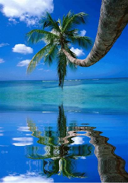 Palm Landscapes Trees Beaches Tropical Nature S415