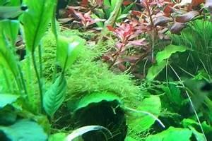 Aquarium Ohne Wasserwechsel : aquarium pflanzen wachsen nicht 7 tipps ohne co2 ~ Eleganceandgraceweddings.com Haus und Dekorationen