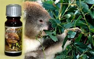 Duftöl Selber Machen : duft l eukalyptus seife selber machen die ~ Orissabook.com Haus und Dekorationen