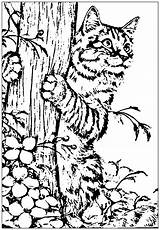 Coloring Cats Adults Animal Cat Printable Children Realistic Adult Animals Funny Created Colouring Sheets Kitten Complex Popular Justcolor sketch template