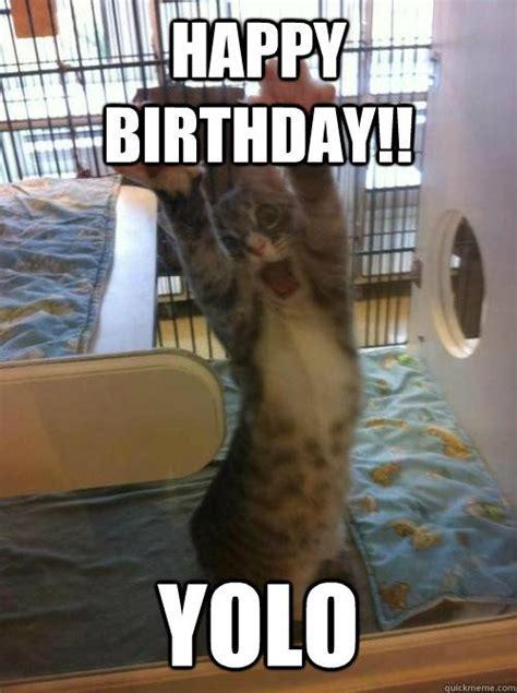 Funny Cat Birthday Meme - 13 best cat birthday meme images on pinterest birthdays funny cats and funny kitties