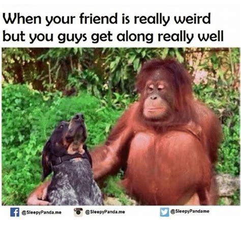 Weird Memes - when your friend is really weird but you guys get along really well sleepypandame panda me