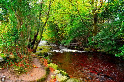 x au bureau tlcharger fond d 39 ecran rivière forêt arbres route fonds