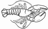 Coloring Lobster Sheet Giant Realistic Sheets Cartoon Children sketch template