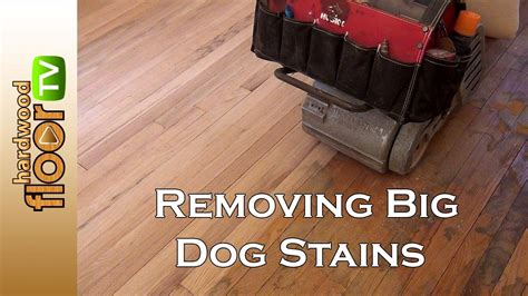 Removing Pet Stains From Wood Floors by Remove Big Pet Stains In Hardwood Floors