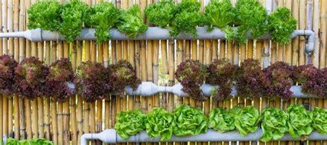 Vertical Gardening Zucchini-garden Ftempo