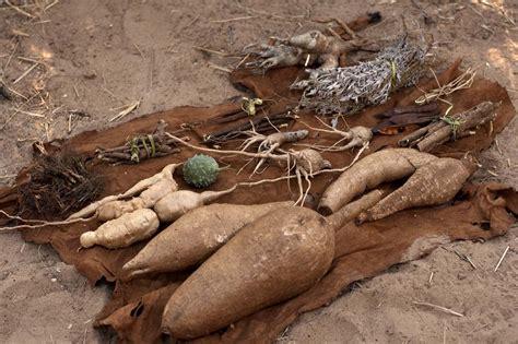 Bushmen Initiation Hunt