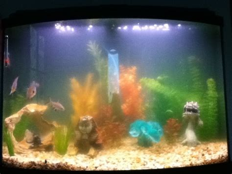 cloudy fish tank my water is constently cloudy my aquarium club