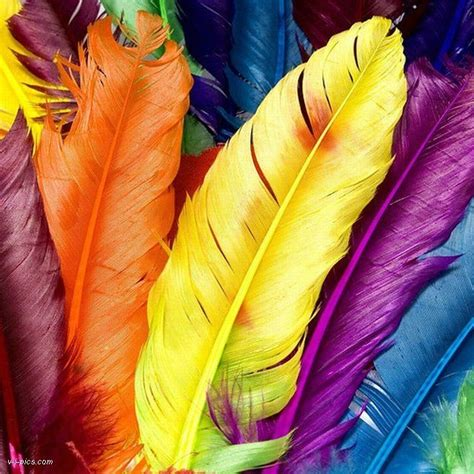 colored feathers rainbow colored feathers 2 rainbow of colors