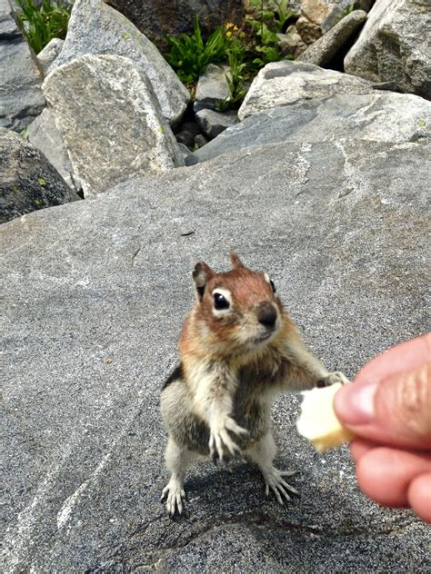 Keep in mind that squirrels can leap across a distance of up to ten feet and some species of for best results, dig it into the ground at least a few inches to prevent them from squeezing under the part 4. Erik's Fly Fishing Blog: Coffee Cup Lake