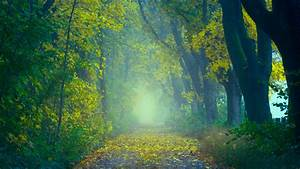 Autumn, Foggy, Forest, 5k, Wallpapers