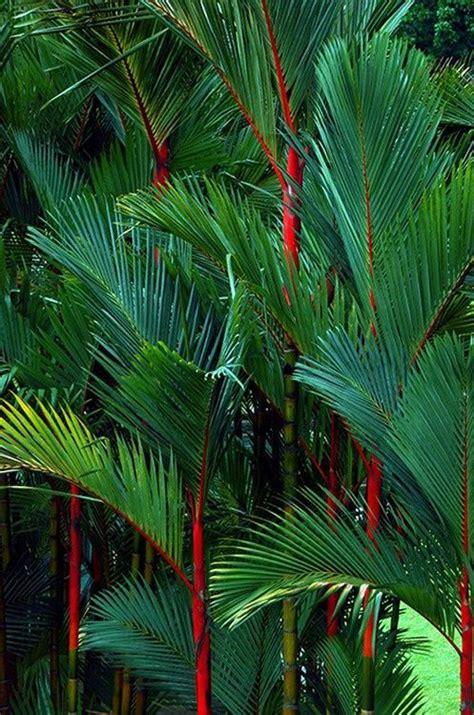 Pin de Jonathan Adler em art | Jardim balinês, Belos ...