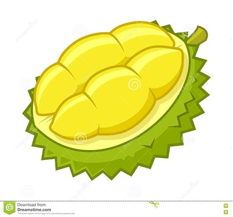 clipart vector durian illustrations vector stock images
