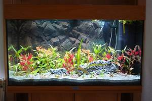 Aquarium Einrichten Beispiele : das aquarium einrichten schritt f r schritt erkl rt my fish ~ Frokenaadalensverden.com Haus und Dekorationen