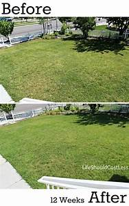 Our Results  Before And After Power Raking Our Lawn