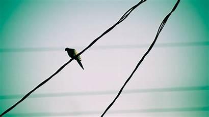 Watching Lines Birds Power Skies Pigeons Wallpapers