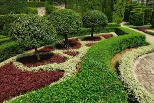 Small Ornamental Evergreen Trees for Landscaping
