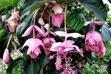 Nomi Dei Fiori Dalla A Alla Z - piante e fiori dalla a alla z piante appartamento