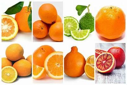 Varieties Oranges Orange Difference Between Parts Winter