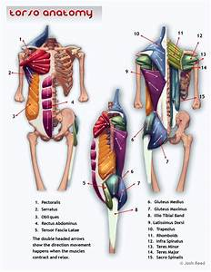 393 Best Muscles In Fitness Images On Pinterest