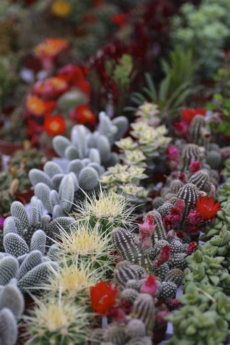 ไม้อวบน้ำ สีสันสดใส เทรนด์ใหม่ในการจัดสวน
