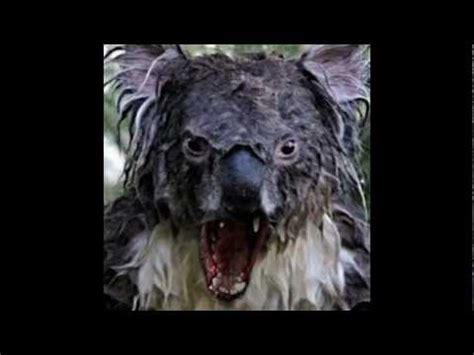 justin bieber ft angry koala youtube