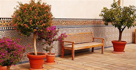 alberi da frutto in vaso 7 alberi da frutto in vaso per il balcone o il terrazzo