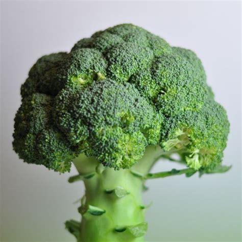 cuisiner des brocolis frais comment cuisiner des brocolis 28 images cuisiner le