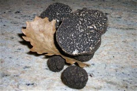 cuisiner la truffe vente de truffes du périgord truffe tuber melanosporum la