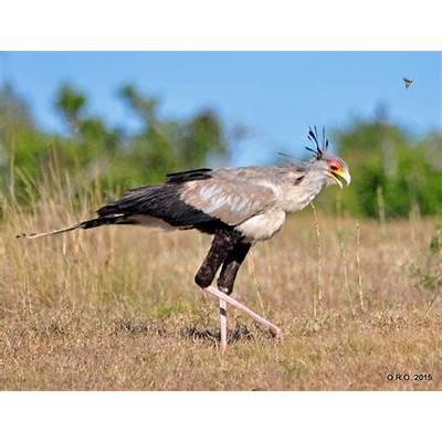 secretarybird – Our Rumbling Ocean