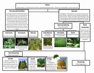 A Leah Bou Original  Plant Classification Chart Pg 1 Of 2
