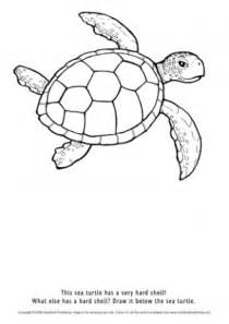 what color is a turtle colour teaching ideas