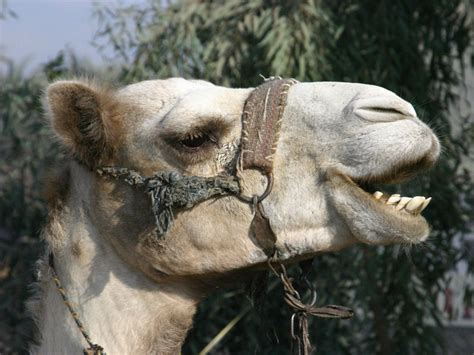 cairo egypt animals pictures  pin  pinterest pinsdaddy