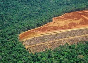 Stopping deforestation in the Amazon by 2020? It's ...