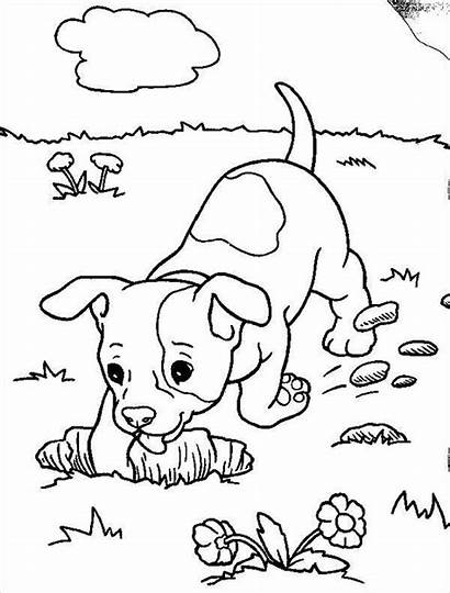 Coloring Puppy Pages Dog Realistic Boxer Dogs