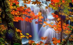 Attractions in dreams trees nature fall leaves beautiful ...