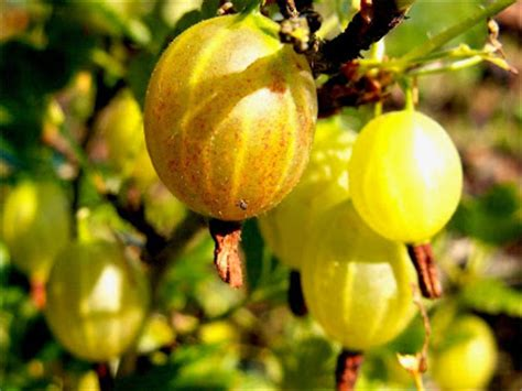 fruit wallpapers awesome fruits images